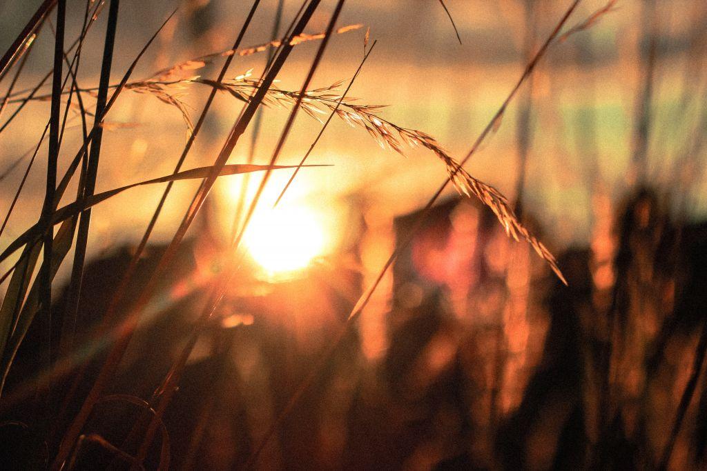 Kuva auringonnoususta vehnäpellon yllä.